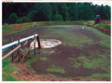 Biokix original dairy lagoon bacillus biokix llc for Design of farm pond pdf