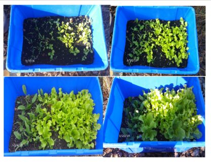 Time lapse showing results of BioKix Plant Growth product